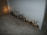 Mould and Odour Remediation image