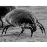 Anti House Dust Mite System
